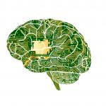 人工知能AIで早産児の脳の発達度を評価、脳波を測定して自動分析ー最新研究