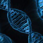 遺伝子組み換え生物GMOとは?動画でわかりやすく解説!安全性や実用化例、メリット・デメリットなど