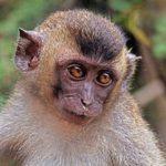 全く同じ遺伝子を持つクローン猿2匹が中国で誕生、霊長類で初ー最新ニュース