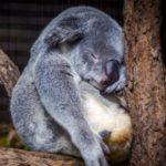 なぜ動物は眠るの?睡眠の役割はDNAのダメージ修復かー最新研究